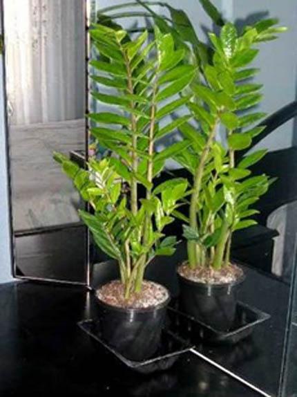 Art flor for Plantas decorativas hidroponicas